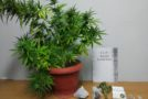 Συνελήφθησαν -3- ημεδαποί σε περιοχή της Φλώρινας για καλλιέργεια και κατοχή ναρκωτικών