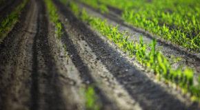Τραγική η κατάσταση στην οποία έχει περιέλθει ο αγροτικός κόσμος της ελληνικής περιφέρειας
